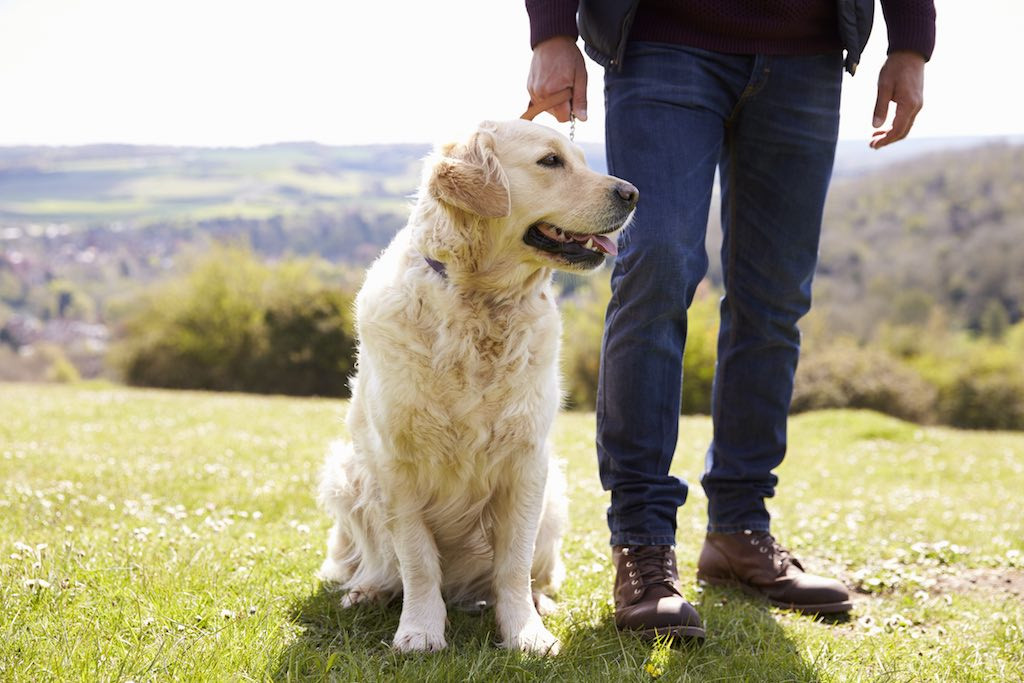 Self-Care-LightWorkers-Dog-Walking