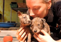 Sweet Puppies Were Stuck in Hardened Tar, Then This Happened