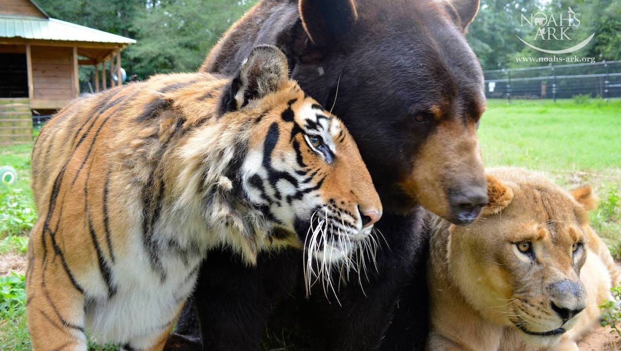 3 Exotic Animals Form Inseparable Bond After Suffering Abuse Together from Their Captors