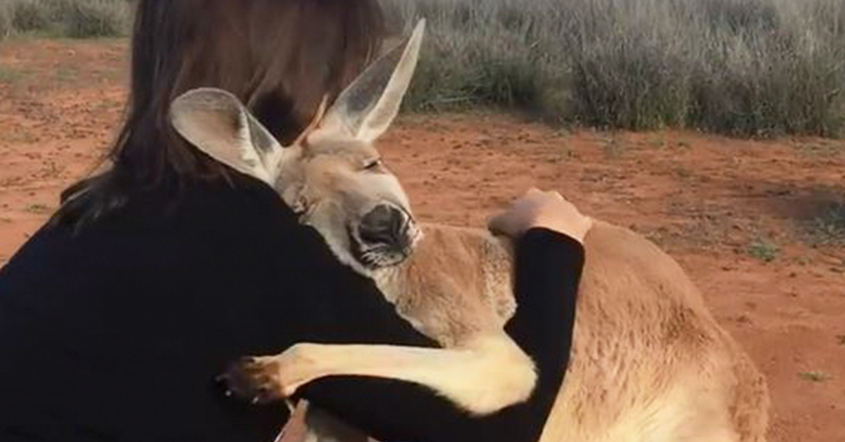 WATCH: Rescued Kangaroo Can't Stop Hugging Volunteers Who Saved Her Life
