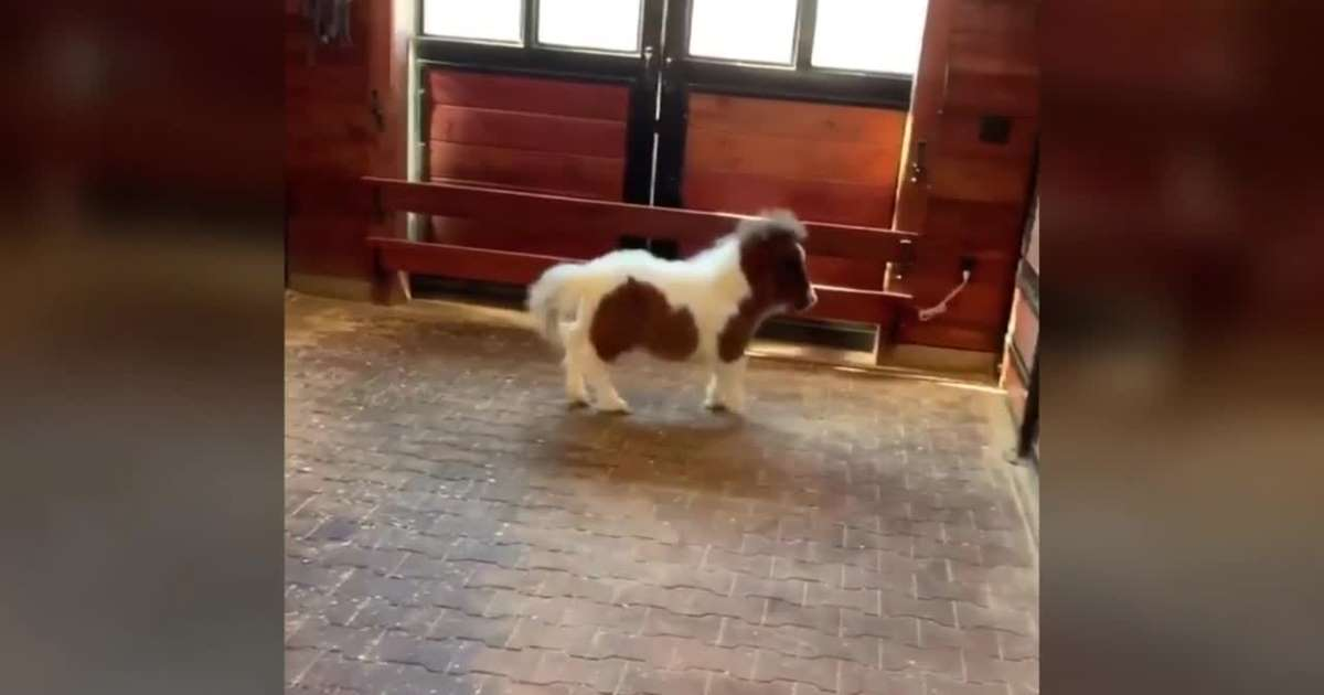 Image of Martha running in the barn