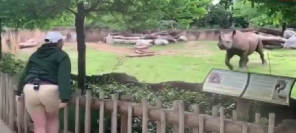 Rhino excited to see his zookeeper